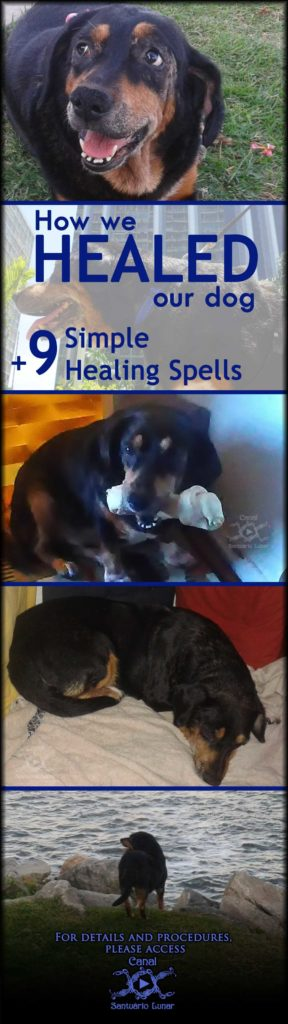 How we healed our dog + 9 simple healing spells