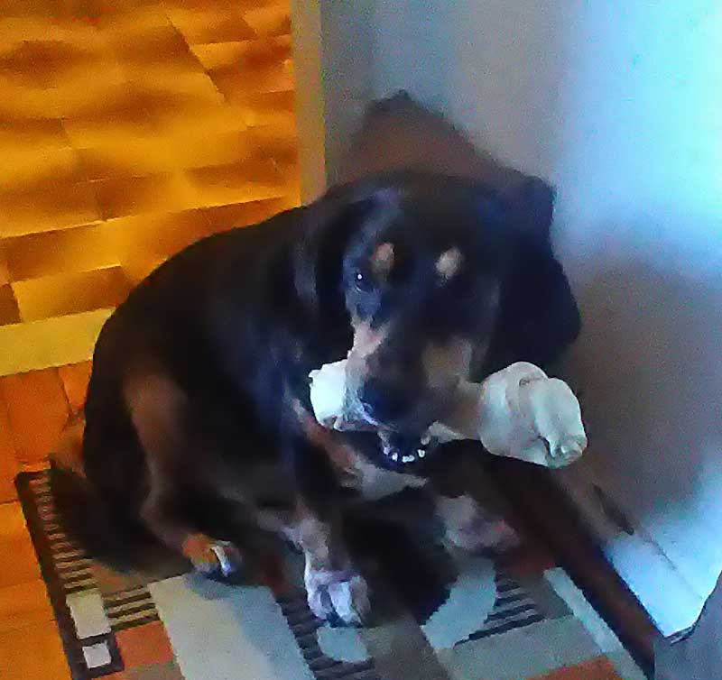 "How we healed our Dog - Vanessa 18yo, ""This bone is mine!"""