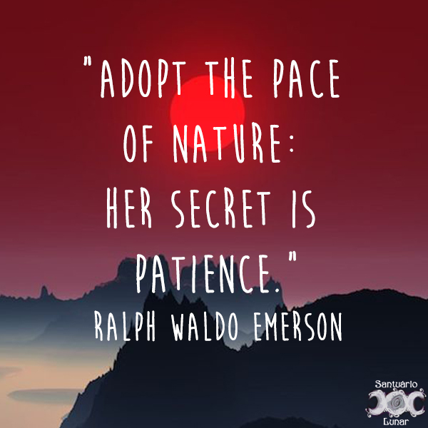 Nature is my church - 11 Adopt the pace of nature: Her secret is patience