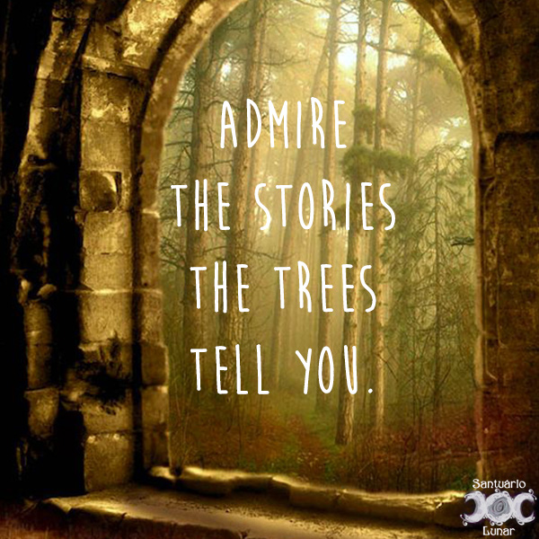 Nature is my church - 18 Admire the stories the trees tell you