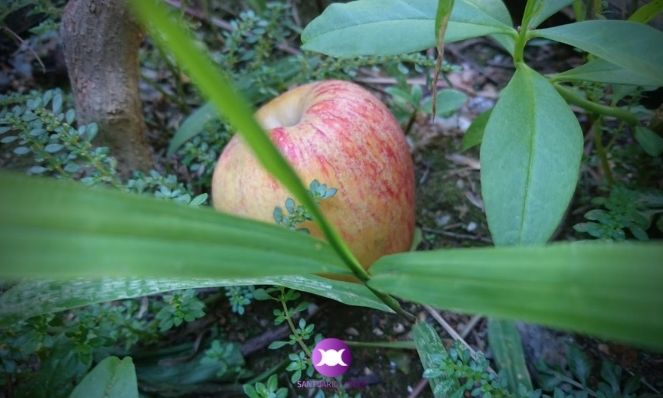 How to invoke the Gnomes - Offer an apple to the Nature Spirits of Earth